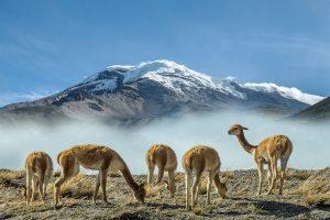 reasons to visit ecuador