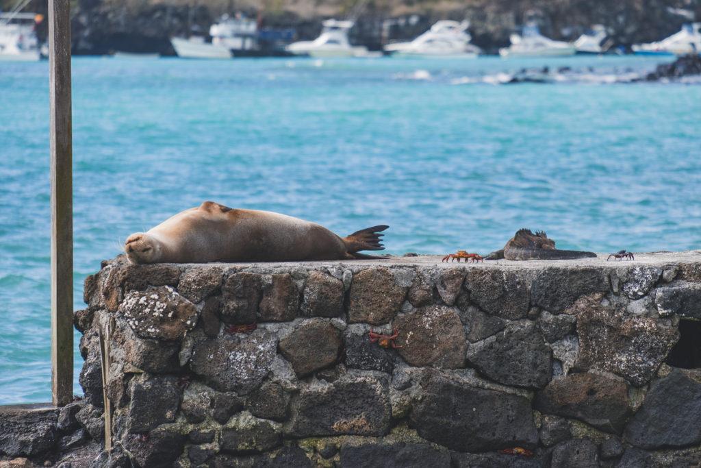 Galapagos Islands Ecosystem