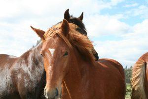horses-hosteria-papagayo-2