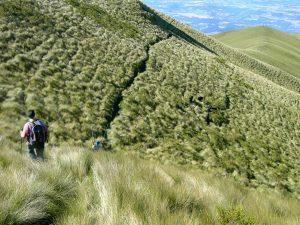 pasochoa-path