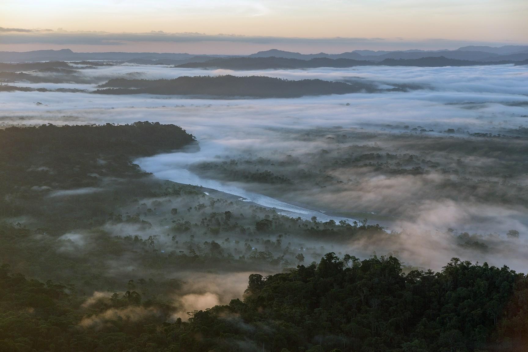 Amazonas, Ecuador, Gulliver, Rainforest