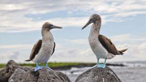 Über Galapagos