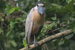Top 10 Most Seen Animals Amazon Rainforest