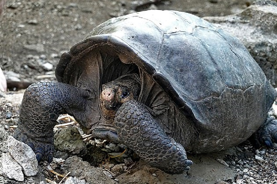 new tortoise discovered