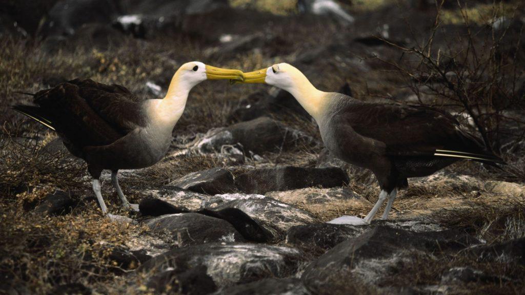 galapagos birdlife